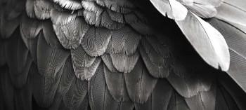 Angel-Investor-wings