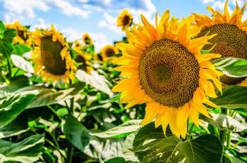 ukraine-agriculture-top