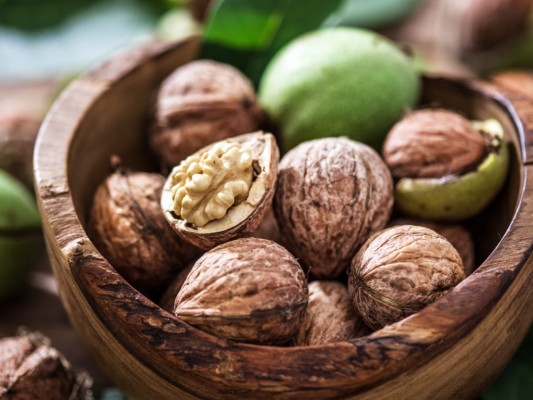 agriculture-plant-walnut