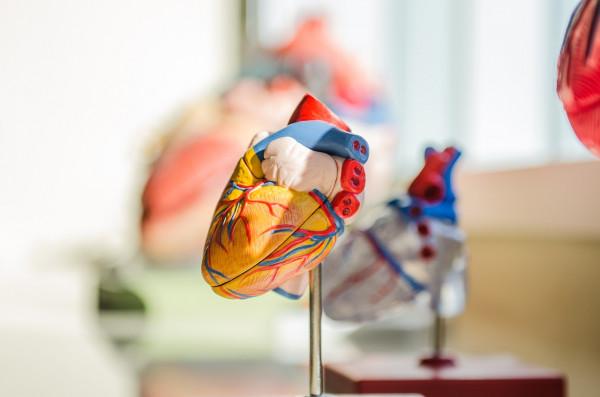 heart-2607178_1280 (1)