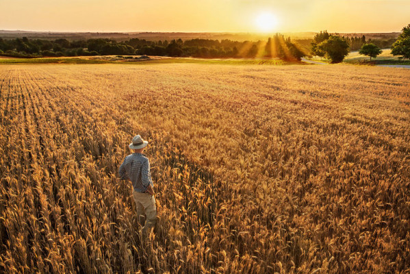 farmer-loan