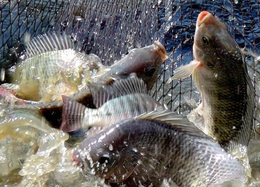 fish-research-ua