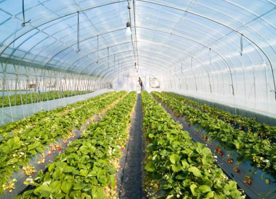 greenhouse-ukraine