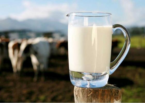 milk-production