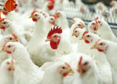 Investment fund Safedam buys 20% stake in Volodymyr Volynskiy poultry farm