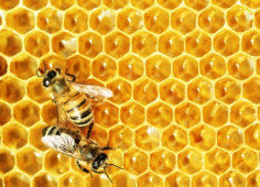 Austrian investors enter into joint venture of honey business worth EUR 10mln