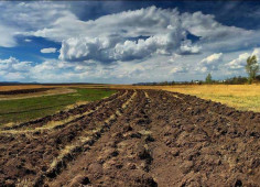 Аgricultural companies and agriculture land for sale in Ukraine