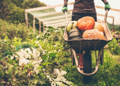 Organic producers pave way to European markets