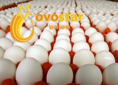 Egg producer Ovostar to expand its production facilities