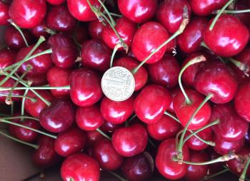 cherry-main