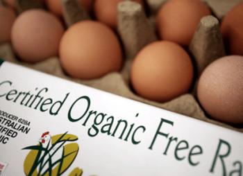 organic-eggs1