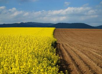 agriculture-land-nikolaev