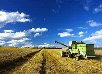 agriculture-chernihiv