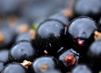 berrys-smor