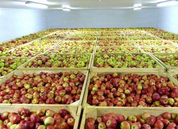 apples.1140x600