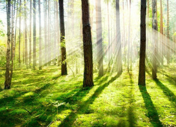 bigstock-Forest-Morning-Fog-Misty-and-44698516