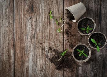 seed-startup-venture