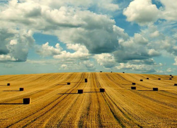 agricultural-land_nw