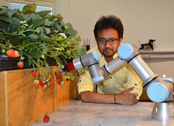 robot-strawberries