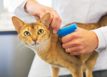 Украинский сервис для владельцев домашних животных Animal ID привлек $500 тыс