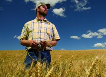 Американские власти выделят свыше $23 млрд. местным фермерам