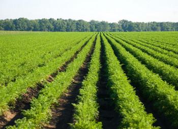 Западный Буг получил одобрение АМКУ на покупку агрофирмы на Львовщине