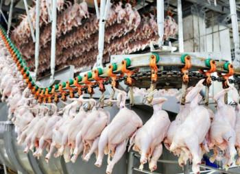 Владимир-Волынская птицефабрика строит убойный цех за 1,5 млрд. грн