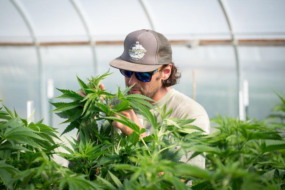 C21 Investments - каннабис / марихуана